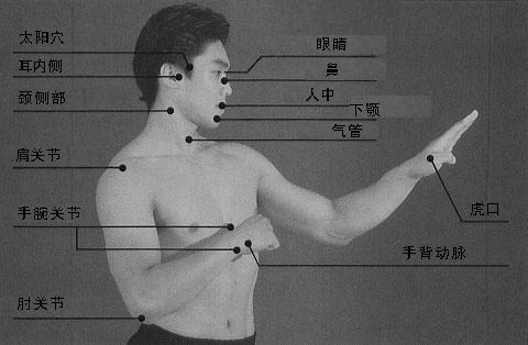 人体要害部位图